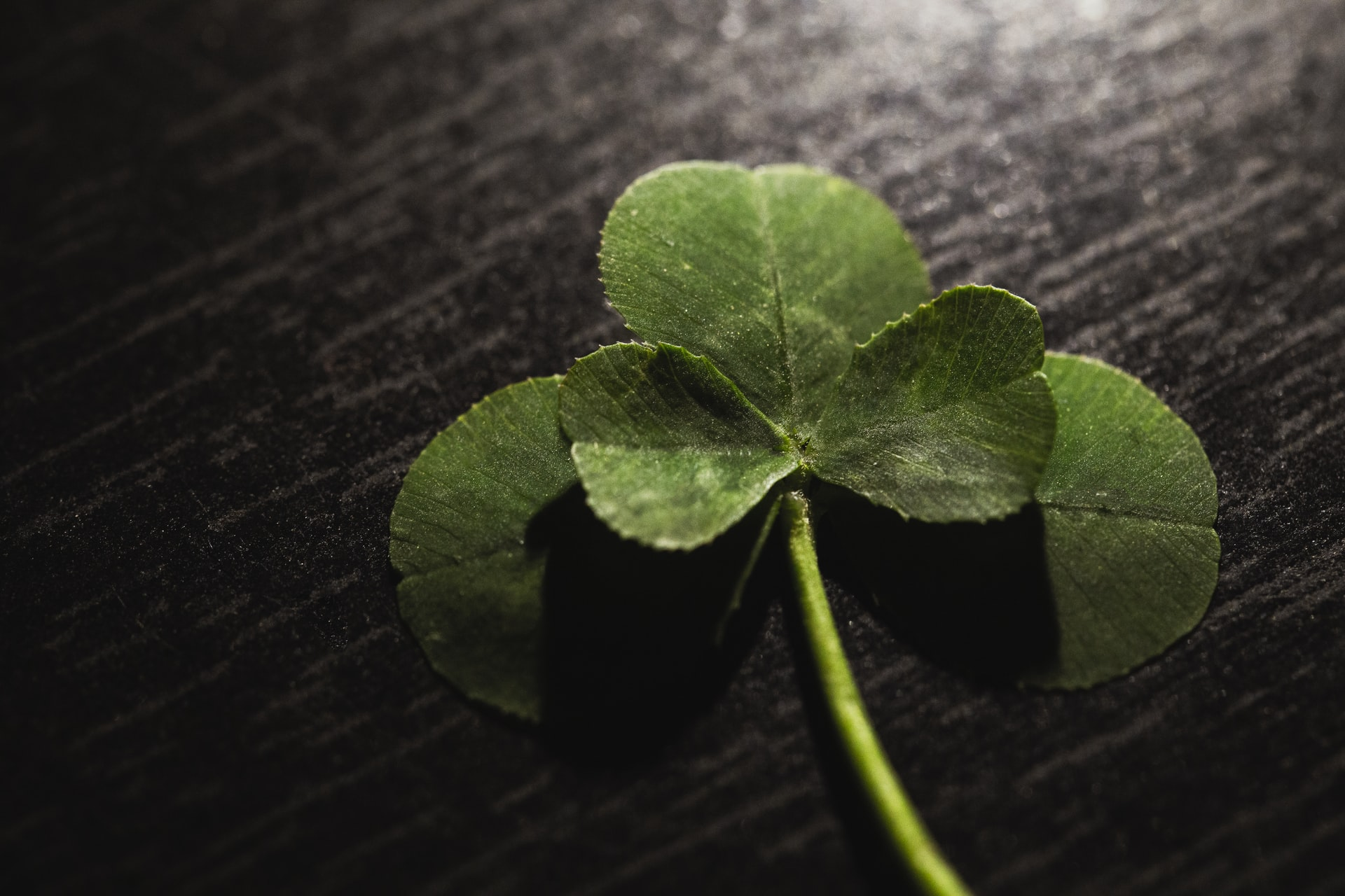 This image shows a clover on a black background.