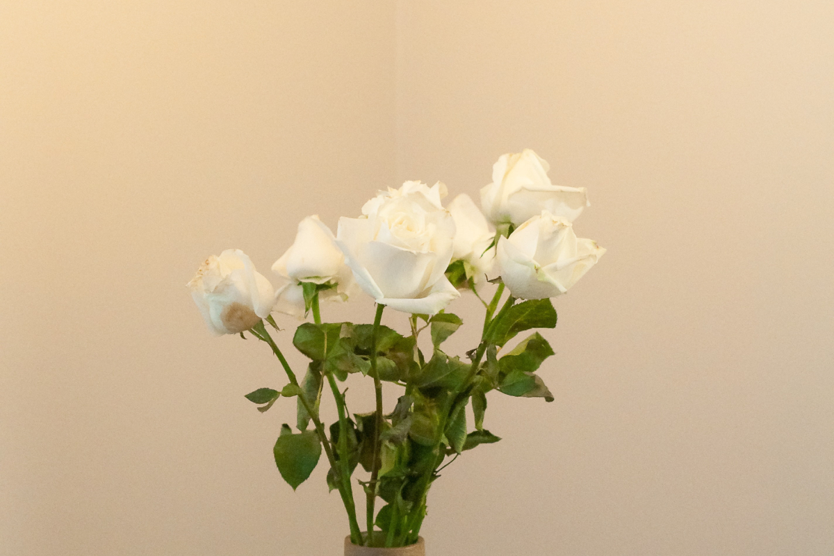A cream background with white roses in the foreground.