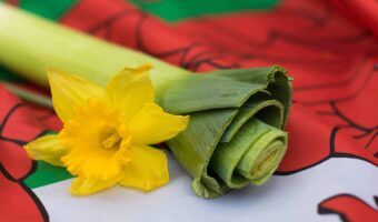 This image shows a close up of a leek and a yellow daffodil as they rest on top of the famous welsh flag.