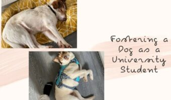 """In this image, Nistor, Sam's dog, is laid down. In one image he is asleep and in the other he is looking at the camera whilst laying on his back. The background is pink with a dark pink paint stripe behind the images. Next to the images is the title of the article: """"Fostering a dog as a university student"""""""