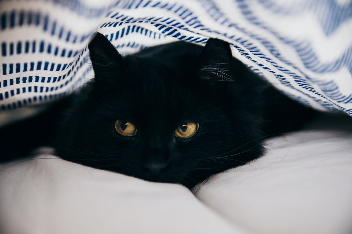 This image shows a black cat gazing out of the frame under a striped blanket.