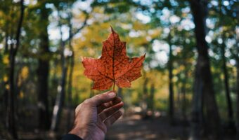 This image shows a maple leaf representing canada being held up in a forrest.