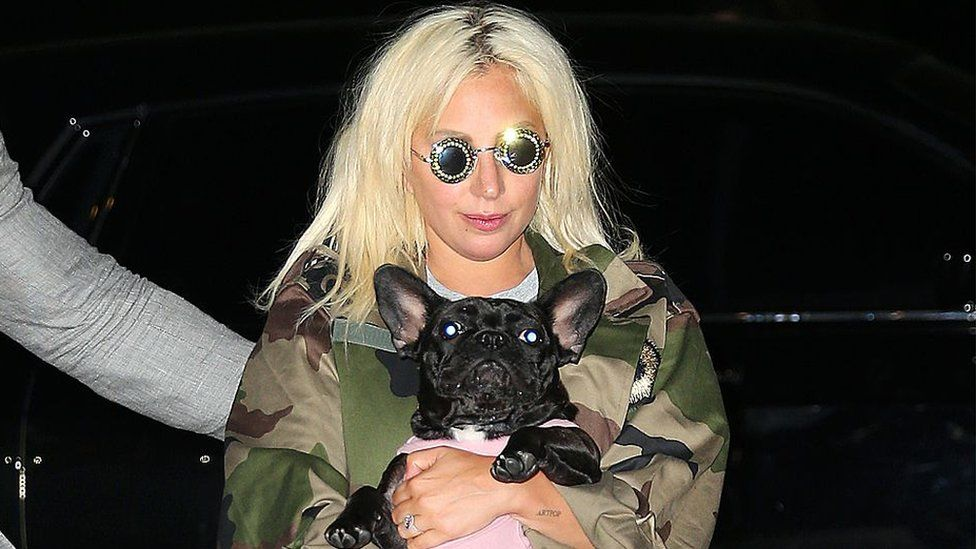 This image shows star, Lady Gaga as she walks and cradles her dog after the dognapping incident.