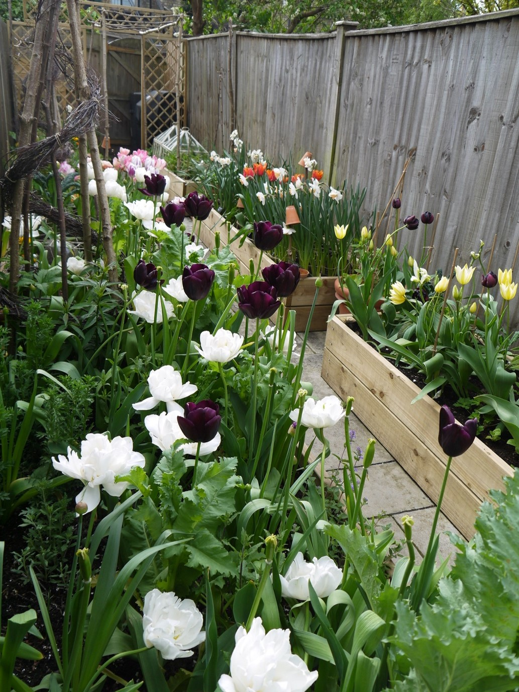 In this image, Alex has taken a closer picture of the flowers in his garden. The flowers are in wooden boxes along the side of the path. The flowers range from white, black, orange and yellow.