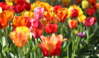 This image was not taken from Alex's garden. The image shows a variety of flowers, ranging from yellow, orange, pink and red.