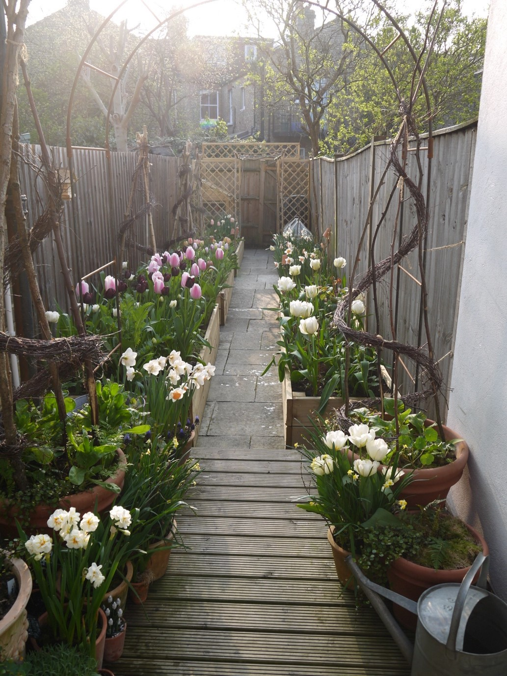 In this image, Alex has taken a picture of their garden. In the middle is a wooden path and at either side are different types of potted plants.