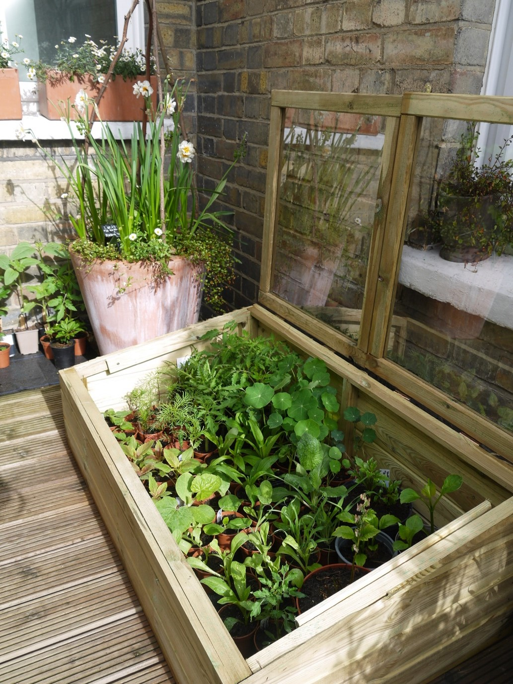 In this image, Alex's plants are growing in a wooden box, which sits in his garden by the house. The box has a lid, that has been lifted to take the photo. The lid is made out of the same wood and has two glass/plastic windows on the top. By the box are some potted plants.