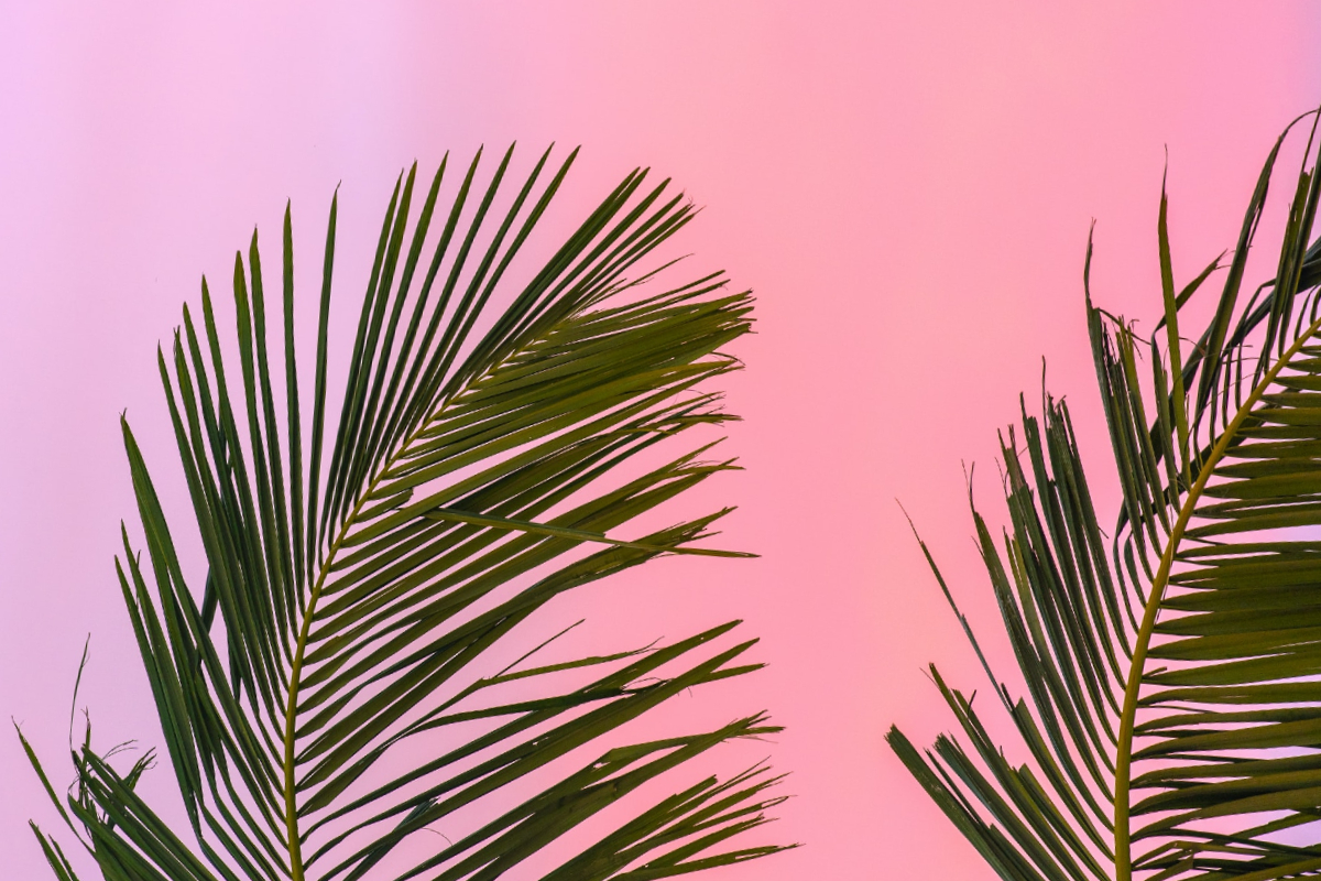This article shows some palm trees in the foreground with the background being a bright pink sunset, giving summer vibes,