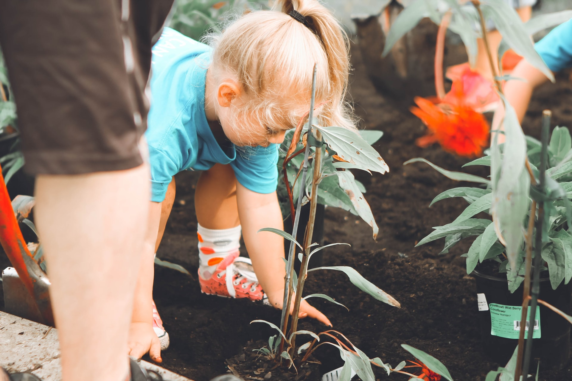 This image shows a young girl helping with the gardening.